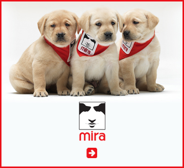 Abled Public Service Ad for MIRA Foundation Canada and USA that provides guide dogs for blind children between the ages of 11 and 17. Click here to go to their website.