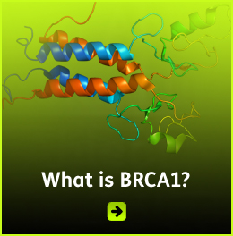 Link box shows a colored strand of DNA with the caption 'What is BRCA1'. CLick to link to more information at Wikipedia.com