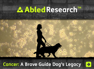 AbledResearch Headline link banner shows a silhouette of Abled.com Co-Founder Laura MEddens walking with her Seeing Eye guide dog Wagner against a backdrop of Waggie's T-Cells as seen under a microscope with the headline: Cancer A Brave Guide Dog's Legacy. Click here to go to the article.
