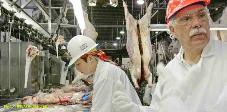 In this photo from NPR/AP, Former Agriculture Secretary Ed Schafer dressed in white sanitation overalls, hairnet, glovers and safety glasses with a coral red helmet,  follows the work of USDA inspectors at a Cargill meat packing plant in Schuyler, Nebraska in 2008.