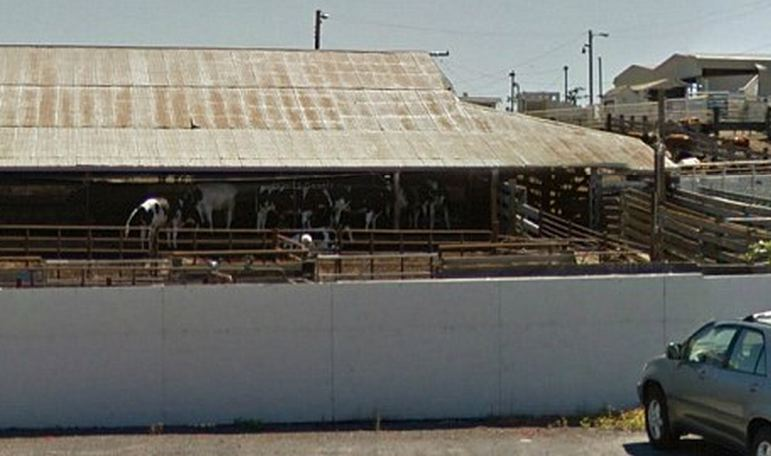 Photo from Google Maps of an outdoor livestock stable with a metal roof in Rancho Feeding Corporation in Petaluma, California.