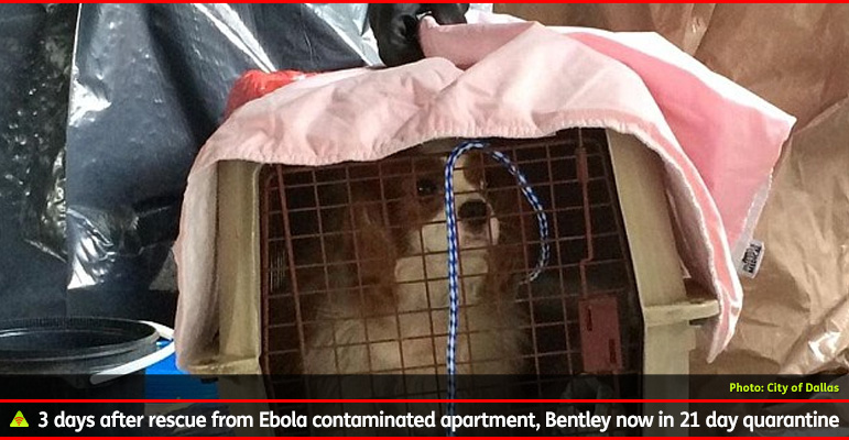 AbledALERT: OUTBREAK: Ebola photo show's Ebola patient Nina Pham's dog Bentley being taken in a portable animal kennel from the nurse's apartment in Dallas, Texas. The caption reads: 3 days after rescue from Ebola contaminated apartment, Bentley now in 21 day quarantine.