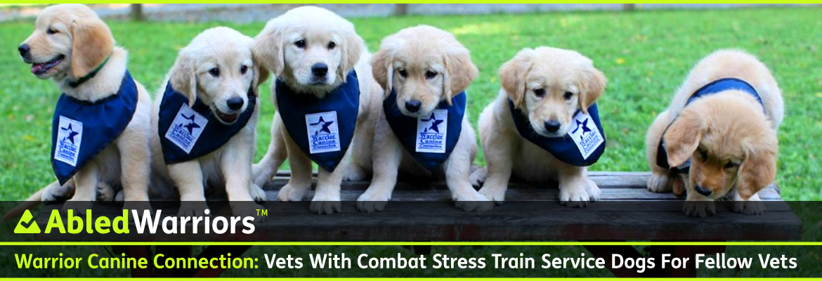AbledWarriors Post Banner shows a row of six Golden retriever puppies sitting side by side on a picnic table facings the camera, with green grass in the background. The puppies are wearing blue kerchiefs around their neck with the Warrior Canine Connection logo that shows the profile of a dog inside a blue star. The headline reads: Warrio Canine Connection: Vets With Combat Stress train Service Dogs For Fellow Vets.