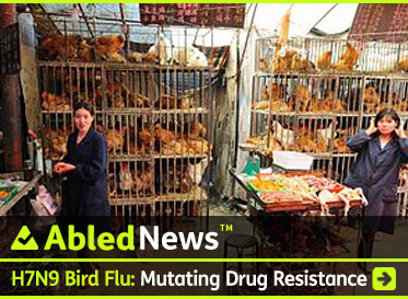 AbledNews post link banner shows two women working in amessy chicken market in China with orange-reddish hens and white roosters crowded into rickety cages. The headline reads: H7N9 Bird Flu: Mutating Drug resistance. Click here to go to the post.