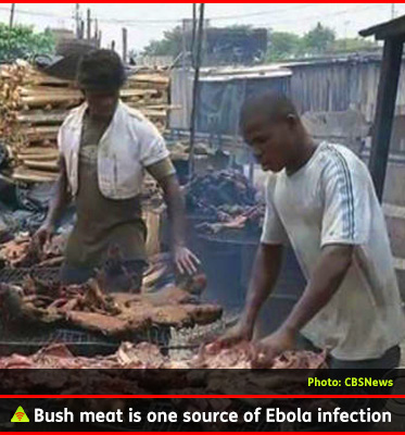 AbledALERT photo shows men cooking bush mean over barrels used for barbecuing meat in West Africa. Bush meat is thought to be one of the sources of Ebola infection, especially fruit bats.