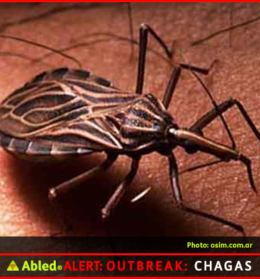 AbledALERT Outbreak: Chagas - graphic for How is is Spread? shows the Triatominae bug, also known as kissing bugs or reduviid bug. The protozoan Trypanosoma cruzi is found in the feces of the bug.