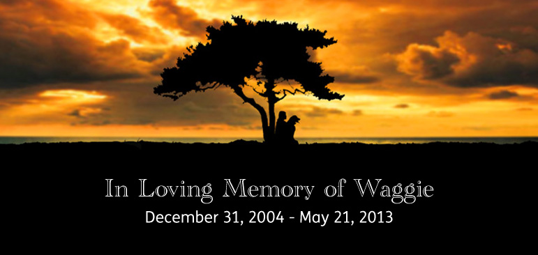 A photo shows the silhouettes of Laura and Wagner sitting under a Divi Divi tree at the seaside on Curaçao against a brilliant orange and yellow sunset with the words: In Loving Memory of Waggie, December 31, 2004 - May 21, 2013.
