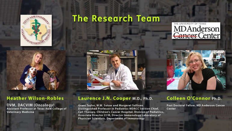 Photos show the research team at MD Anderson Cancer Center and Texas A&M University School of veterinary Medicine and Biomedical Sciences, including team leader Dr. Lawrence Cooper, Assistant Professor Heather WIlson Robles and Dr. Colleen O'Connor