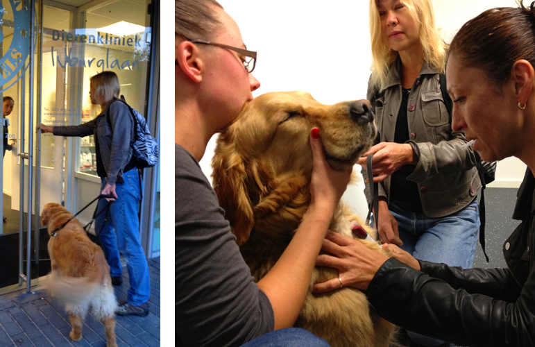 Laura Meddens is shown in two photos entering the Dierenkliniek Ijburg Veterinary practice in Amsterdam where Dr. Careen Loriaux takes a blood sample from Wagner with the help of Natasja Slooten
